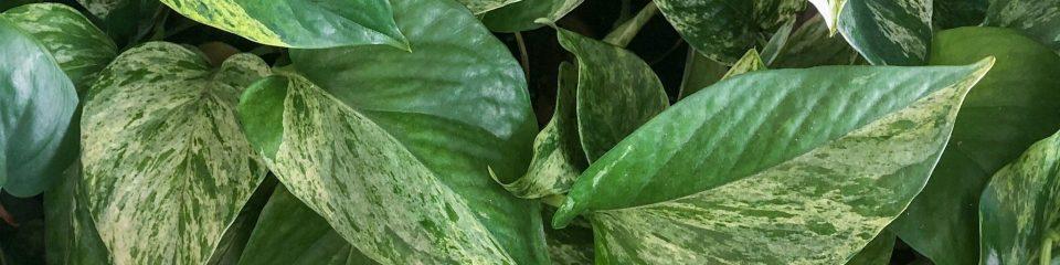 instagram plant background